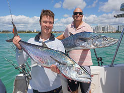 5 spanish and 1 Spotted Mackerel caught on BKs Gold Coast Fishing Charters